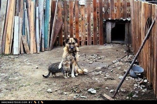 cat dogs friends junkyard kittehs r owr friends what breed - 6547209984