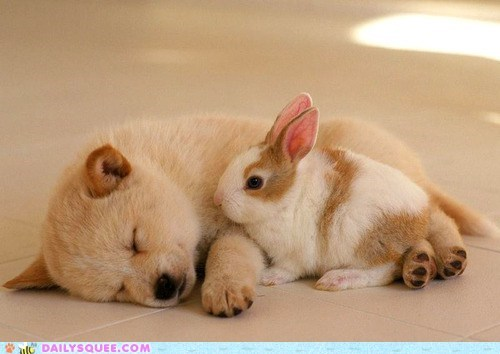 bunny,dogs,Interspecies Love,puppy,rabbit,sweet dreams