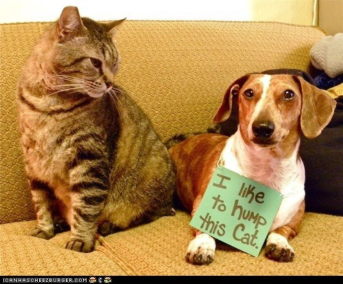 Cats,dog shaming,dogs,goggies r owr friends,humping,Interspecies Love