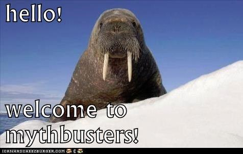 hello! welcome to mythbusters!