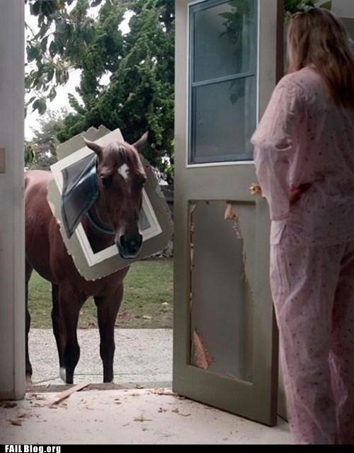 accident animals best of week door Hall of Fame horse whoops - 6547885312