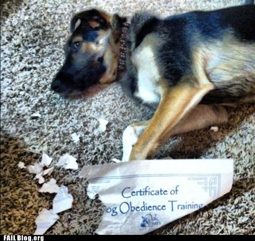 dogs,irony,obedience,pet
