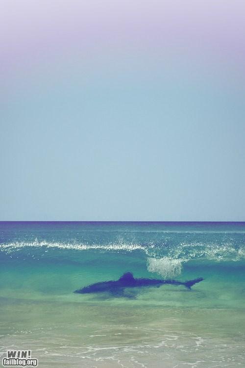 beach dangerous shark wave wincation - 6548136960