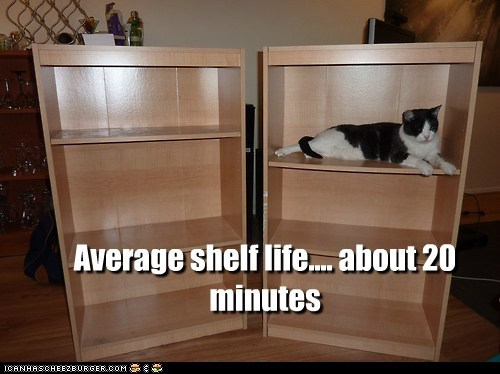 shelf Cats captions shelf life pun ikea - 6548177408