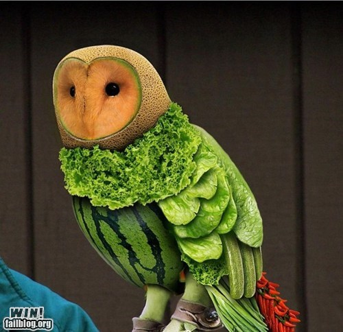 animals bird design fruit Owl vegetables - 6548177920