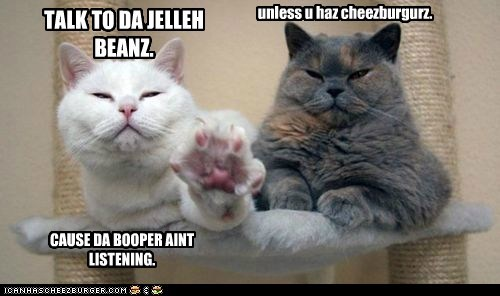 booper,captions,Cats,cheezburger,face,jellybeans,paw,talk to the hand,toes