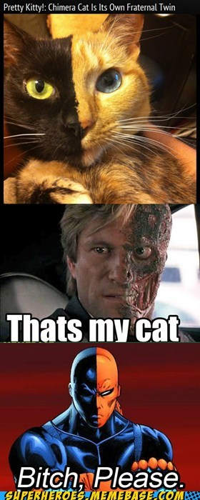 cat,deathstroke,two face