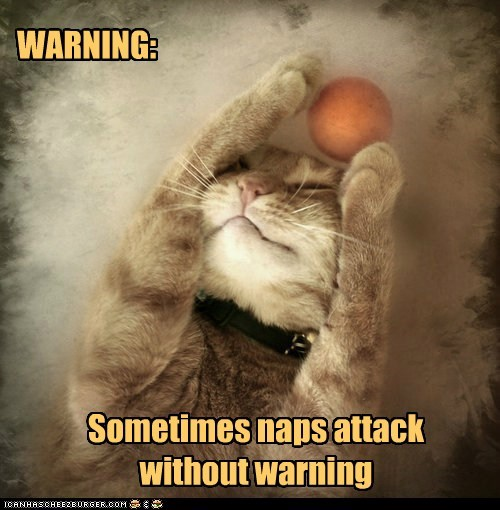 attack,ball,captions,Cats,nap,play,sleep,warning