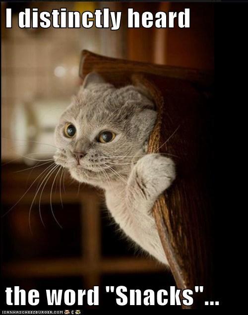 snacks Cats captions snack hear listen hungry nom - 6549481728