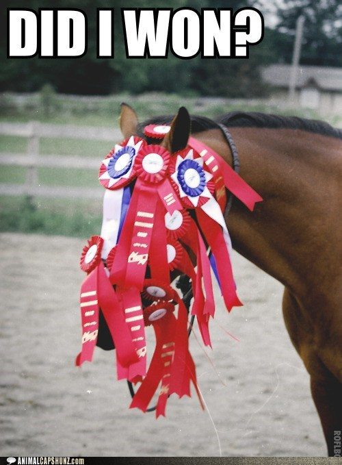 blind,cant-see,horse,race,ribbons,winning,won