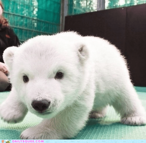 baby polar bear cub squee hug delightful insurance - 6549677824