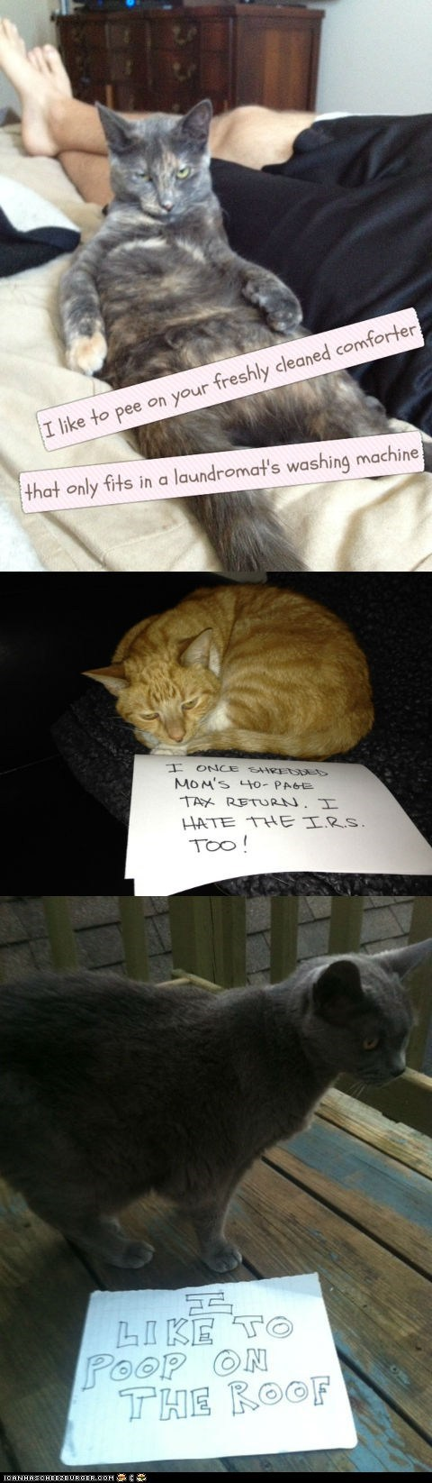 cat shaming Cats destruction dog shaming guilty shame shaming tumblrs