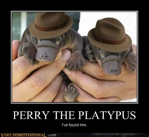 Babies cute found perry the platypus