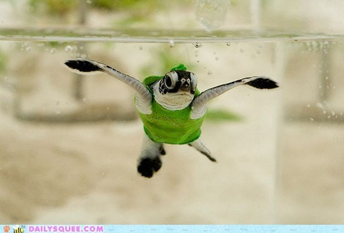 squee,squee spree,sweater,swimming,turtle,underwater