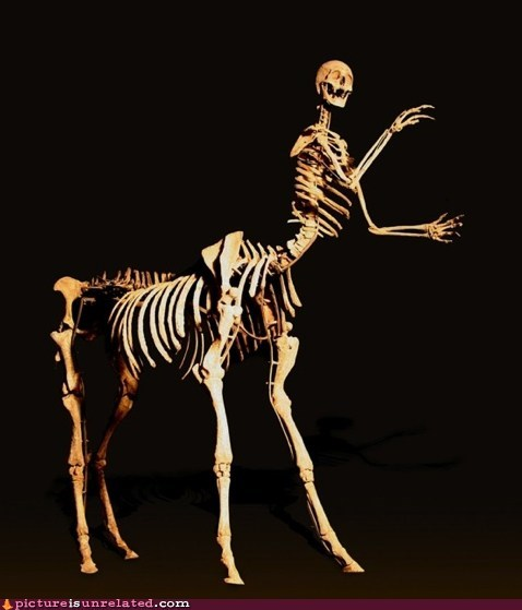 centaur creepy horse skeleton