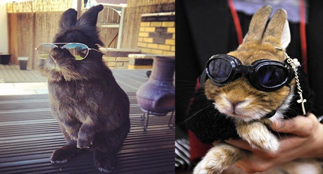 aww bunnies photos glasses cute animals - 6550277