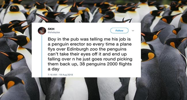 Scottish zoo in Edinburgh shuts down rumor that they have a penguin erector job