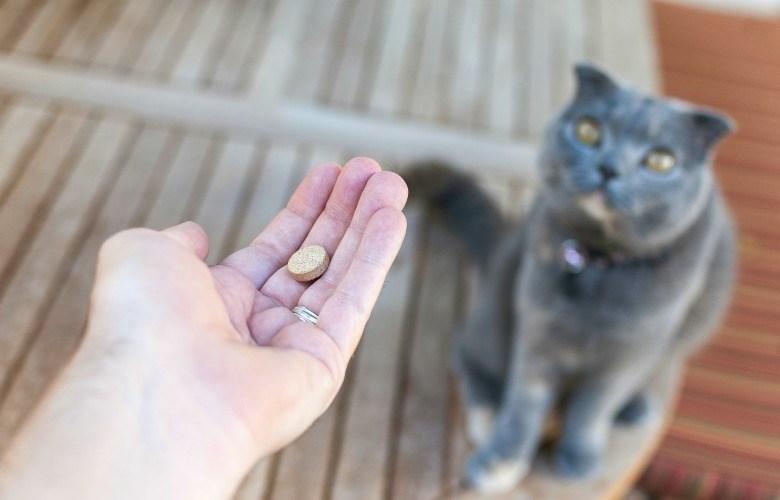 medicine pills Cats solution - 6551301