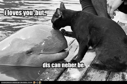 captions Cats KISS love ocean romance tragic whale - 6551419392