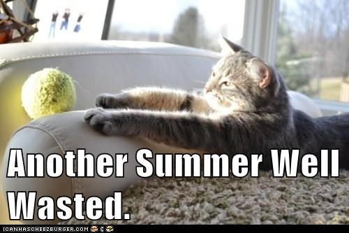 captions Cats inside lazy summer waste - 6551738368