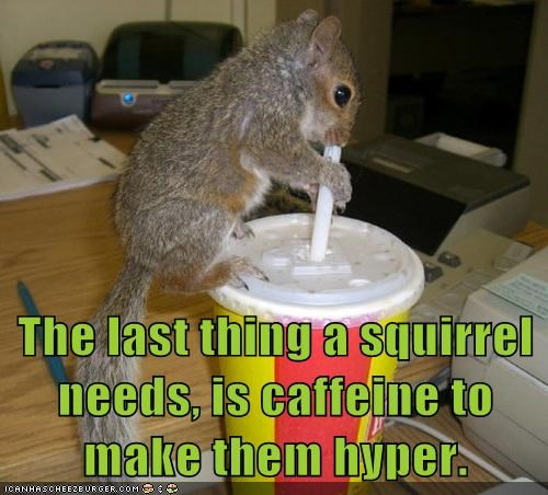 caffeine drinking hyper last soda squirrel