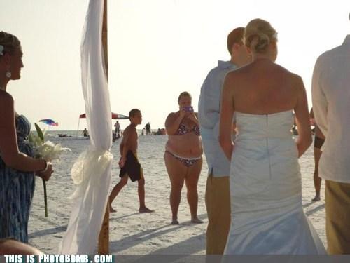 beach,bikini,wedding,whale