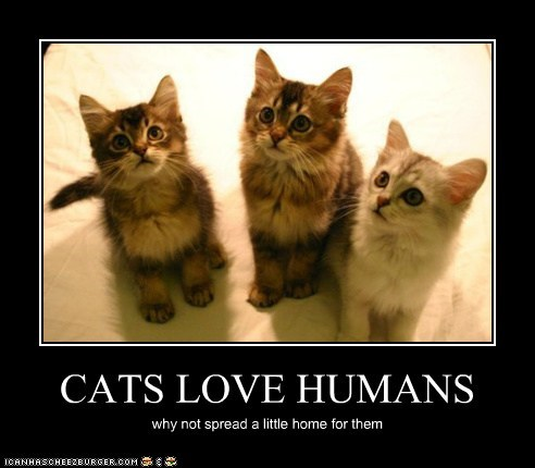 CATS LOVE HUMANS why not spread a little home for them