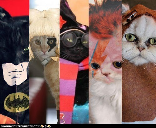 Cats celeb pop culture roflrazzi site news - 6552004608