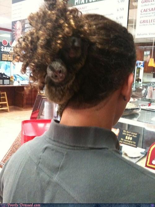 animal,hairdo
