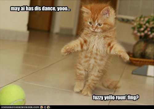 captions Cats dance fuzzy please tennis ball
