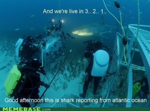 atlantic news ratings are getting despe ratings are getting desperate shark week sharks