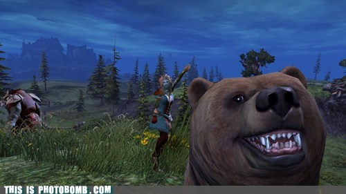 bear guild wars 2 PC video games