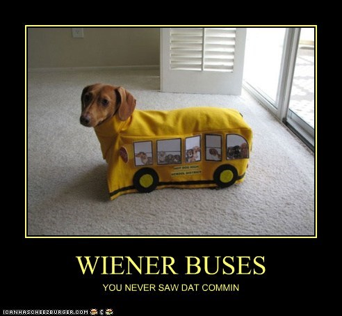 WIENER BUSES YOU NEVER SAW DAT COMMIN
