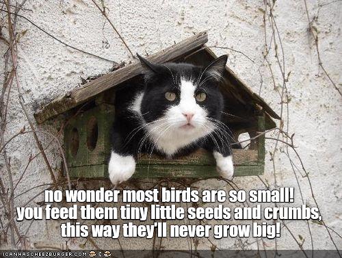 funny memes Memes animal memes cat memes - 6552837
