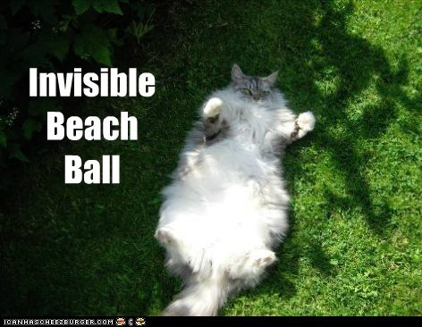 beach ball,captions,Cats,fat,grass,hold,invisible,lawn