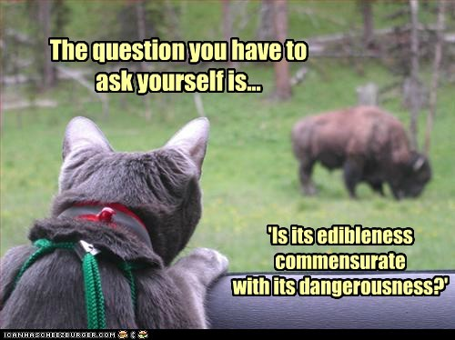 The question you have to ask yourself is... 'Is its edibleness commensurate with its dangerousness?'