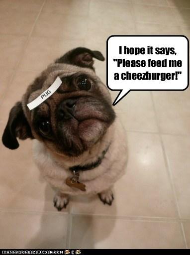 Cheezburger Image 6553415424
