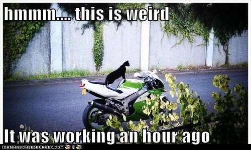 Cats,captions,motorcycle,mechanic,working,gpoy