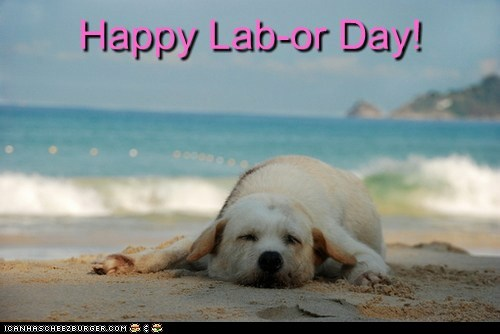 beach dogs labor day labrador ocean sand