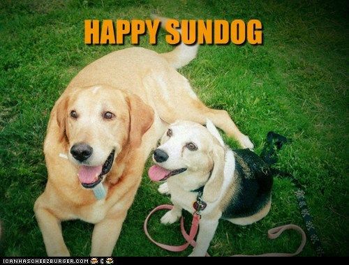 dogs labrador happy sundog beagle Sundog - 6554640128
