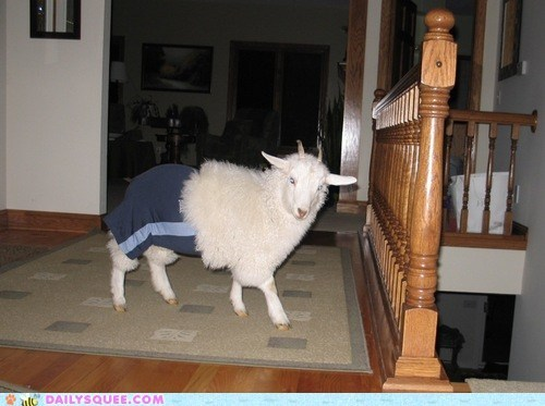 pants goats clothes farm animals squee - 6554665728