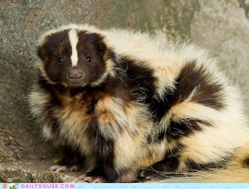 skunk fro floofy hairdo keeping warm squee