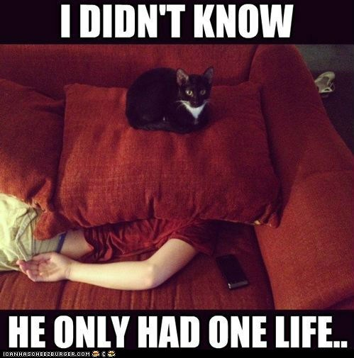 captions,Cats,couches,cushions,Death,i-didnt-know,life,living,murder,nine lives,yolo