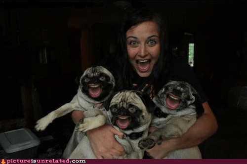 happy,photoshop,pugs
