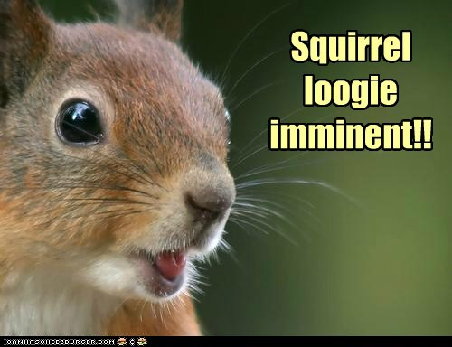 Squirrel loogie imminent!!