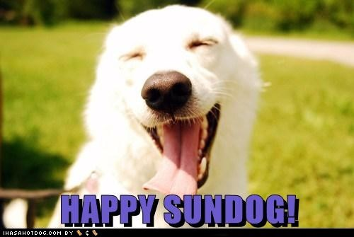 dogs happy sundog smile Sundog sunshine tongue what breed - 6555109120