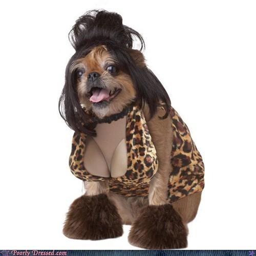 dogs,snooki,wig