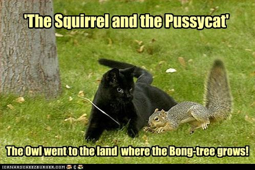 bong cat drugs high land Owl squirrel story
