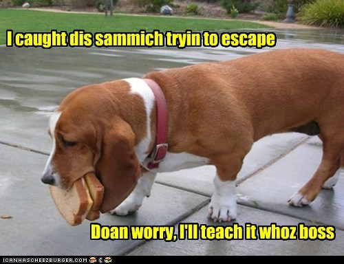 basset hound sandwich escaping caught it - 6555238656