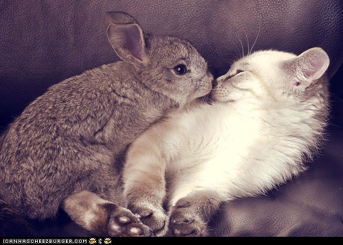 bunnies,Cats,cyoot kitteh of teh day,Interspecies Love,kitten,nose kisses,rabbits